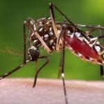 「エボラ」の次は「デング熱」その次は「西ナイル熱」