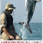 【キャロライン・ケネディ大使へ】米国で養成されてる戦闘用イルカには反対しないんですか?