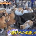 【動物事件工作員さんへ】 次は愛媛県「ネコの楽園」で事件でっち上げないでね