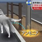 照明柱倒れ小4女児指切断。犬のおしっこで街灯倒壊と報道 ~市の点検ミスで起こった事故を犬の尿が原因であるとすり替え