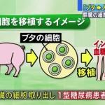 支配者層はSTAP細胞で自家移植、大衆は他家移植どころか豚の細胞から「異種移植」 ~厚労省 ブタから人への移植を容認する方針